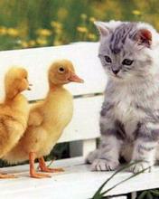 Животные 3