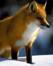 Животные 7