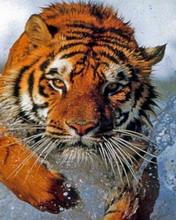 Животные 8